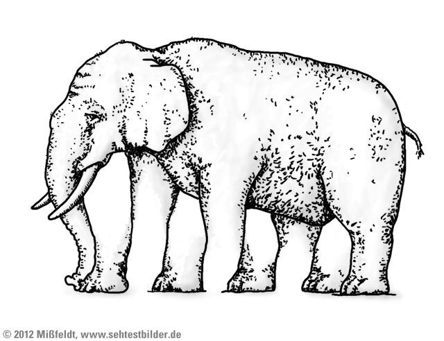 Optische Illusion (wie viele Beine hat der Eelefant?)