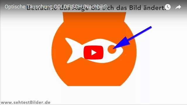 Optische Täuschung: Goldfisch Nachbild